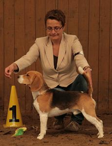 harley V1 jugend houndshow schoeningen 2013 083 klein